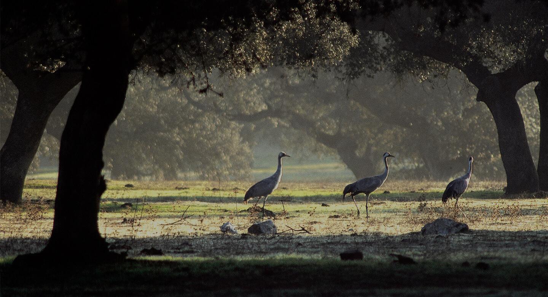 软木树林即栓皮栎林的生态环境-葡萄牙软木协会图片库