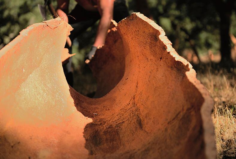 高品质软木的取材地即栓皮栎树01-葡萄牙软木协会图片库