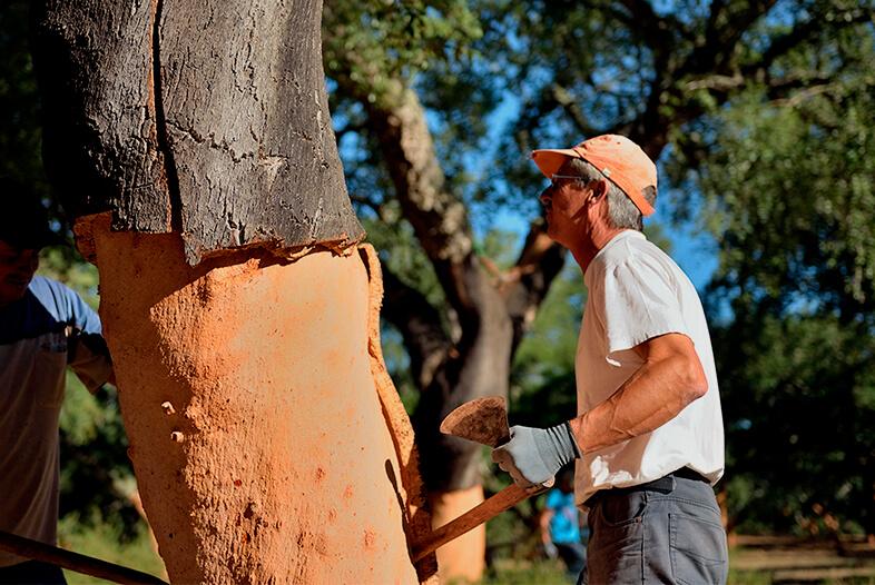软木的采收-葡萄牙软木协会图片库