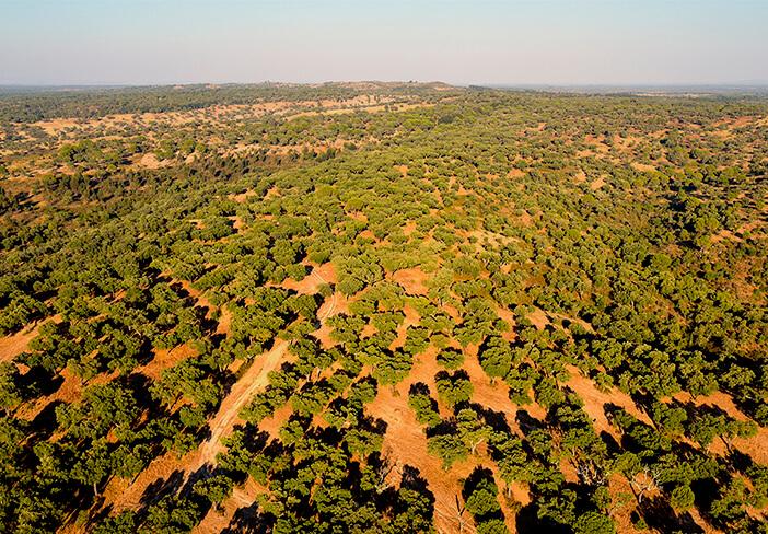 软木的源头即栓皮栎林-葡萄牙软木协会图片库