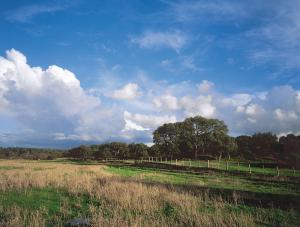 可持续发展令葡萄牙软木更贴近中国 葡萄牙软木协会在华启动新一轮推广计划
